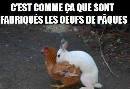 humour - Page 40 20160112