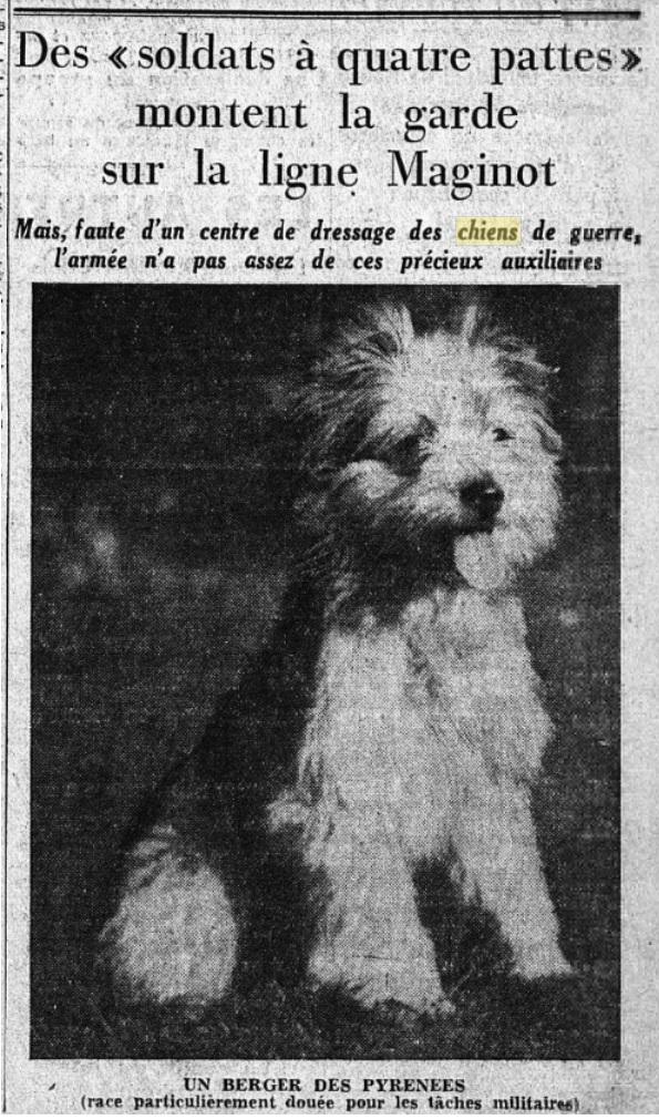 Les chiens dans l'armée française - Page 2 19380917