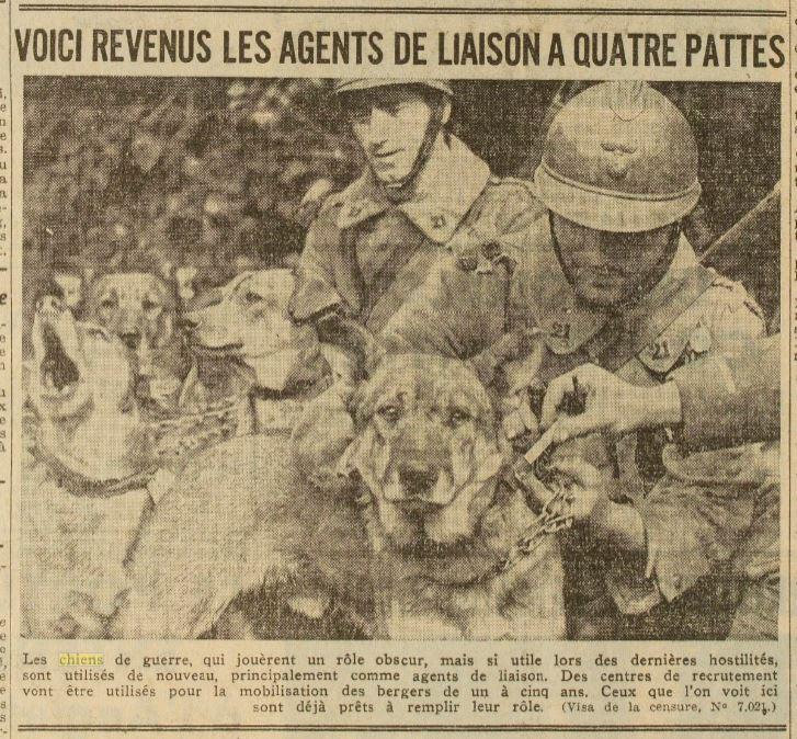 Les chiens dans l'armée française - Page 2 19391015