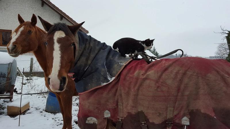 """Concours photos """"les compagnons de vos chevaux"""" gagnant Joël 20160110"""