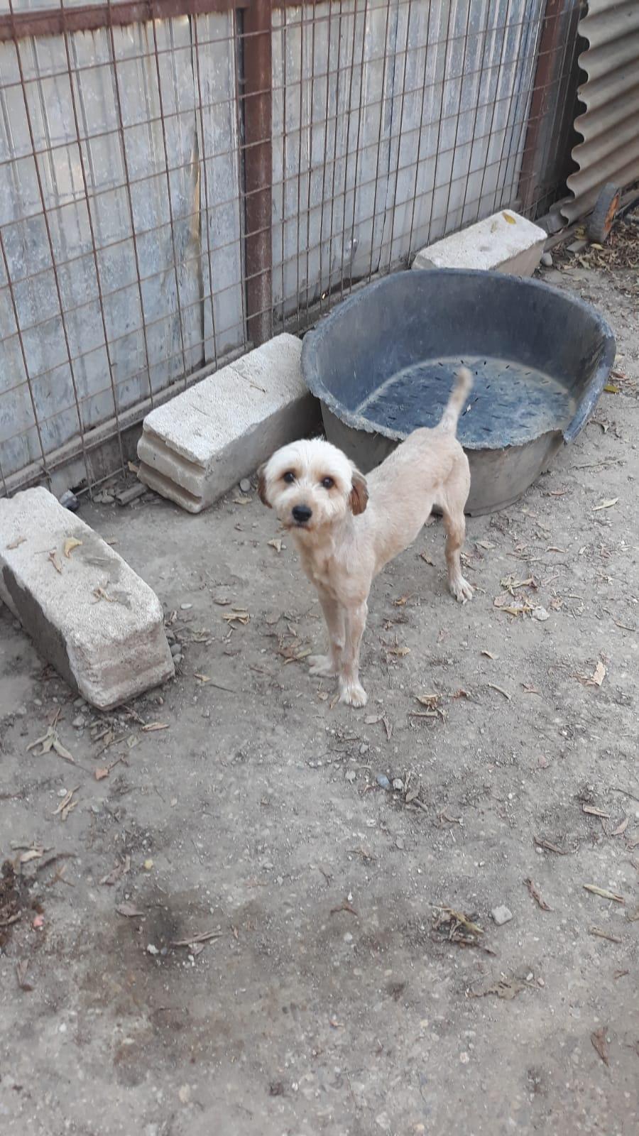 Oguy, jeune chien très sociable né en 2016 0f8b1e10