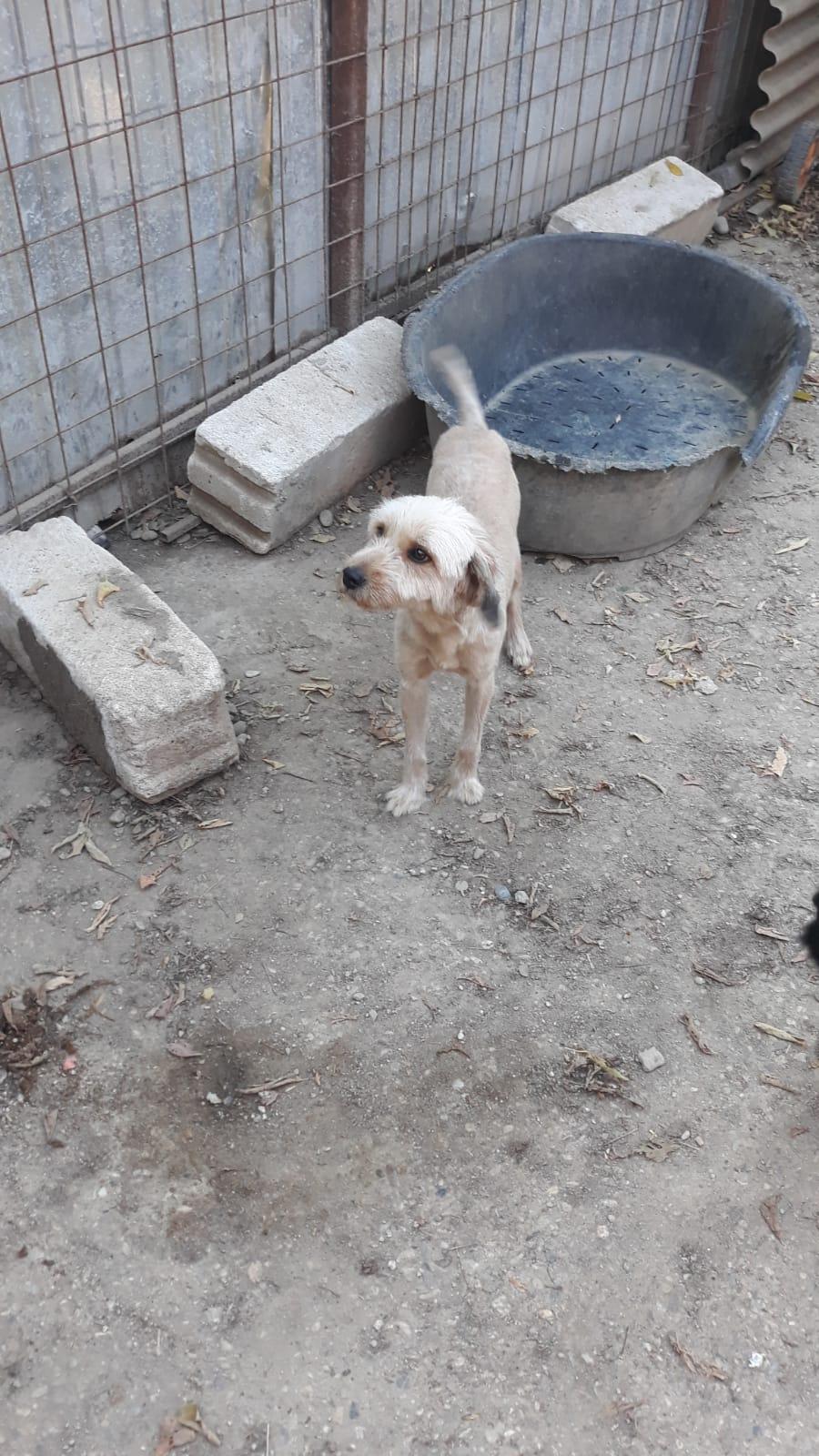 Oguy, jeune chien très sociable né en 2016 27f0fa10