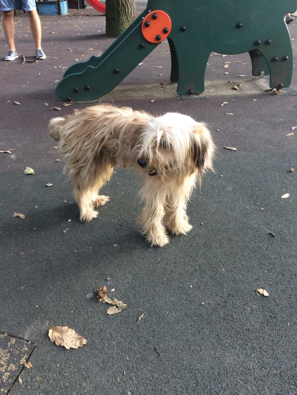 Oguy, jeune chien très sociable né en 2016 41448710