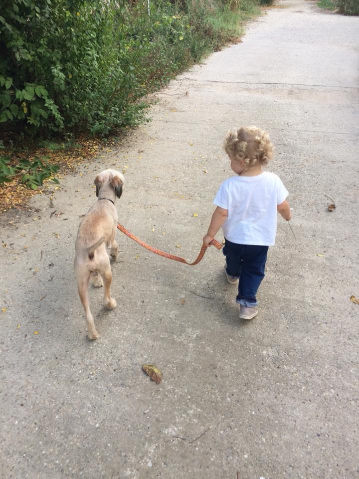 Oguy, jeune chien très sociable né en 2016 42059210