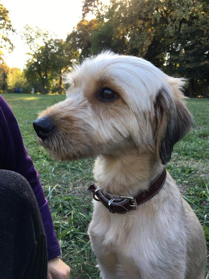 Oguy, jeune chien très sociable né en 2016 43186910