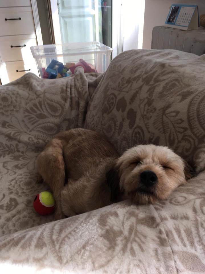 Oguy, jeune chien très sociable né en 2016 43242510