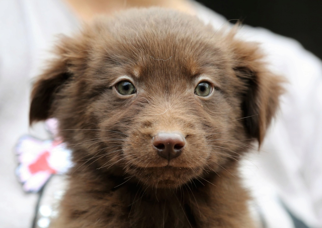 Chocolat, petit mâle né en septembre 2018 46288010