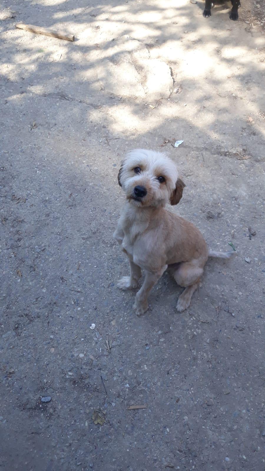 Oguy, jeune chien très sociable né en 2016 5d304a10