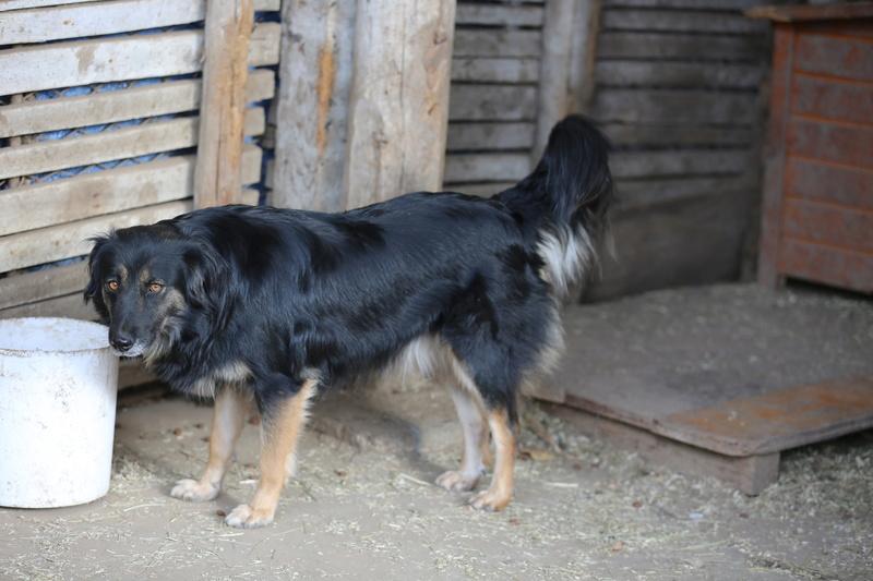 Bonita, femelle née en janvier 2015, taille moyenne  Hx9a0411