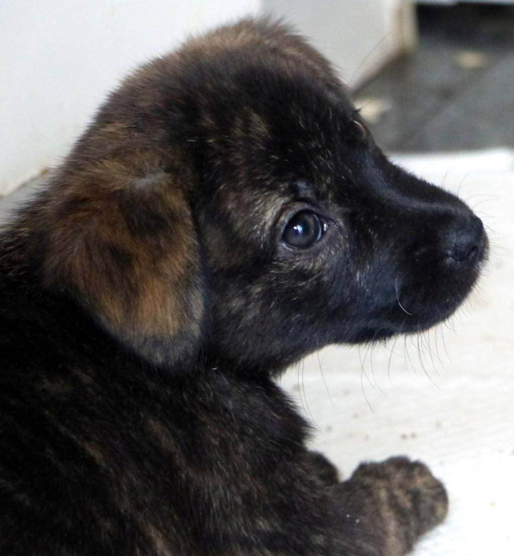 Tosca, petite chienne née en août 2018 Tosca10