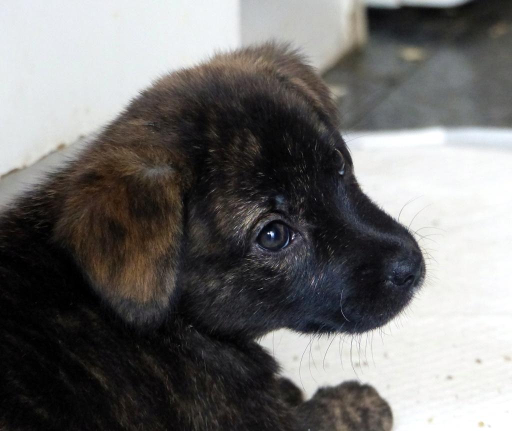 Tosca, petite chienne née en août 2018 Tosca210