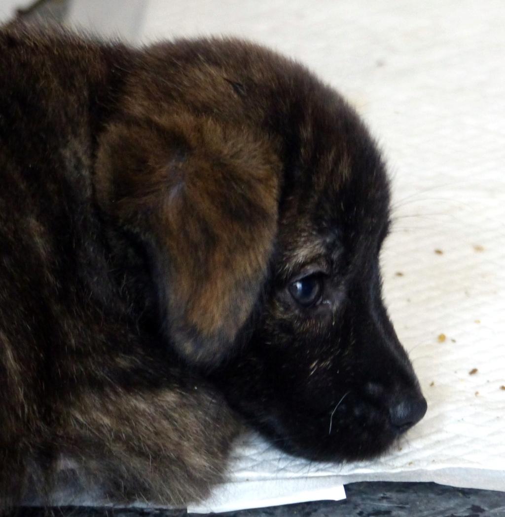 Tosca, petite chienne née en août 2018 Tosca310