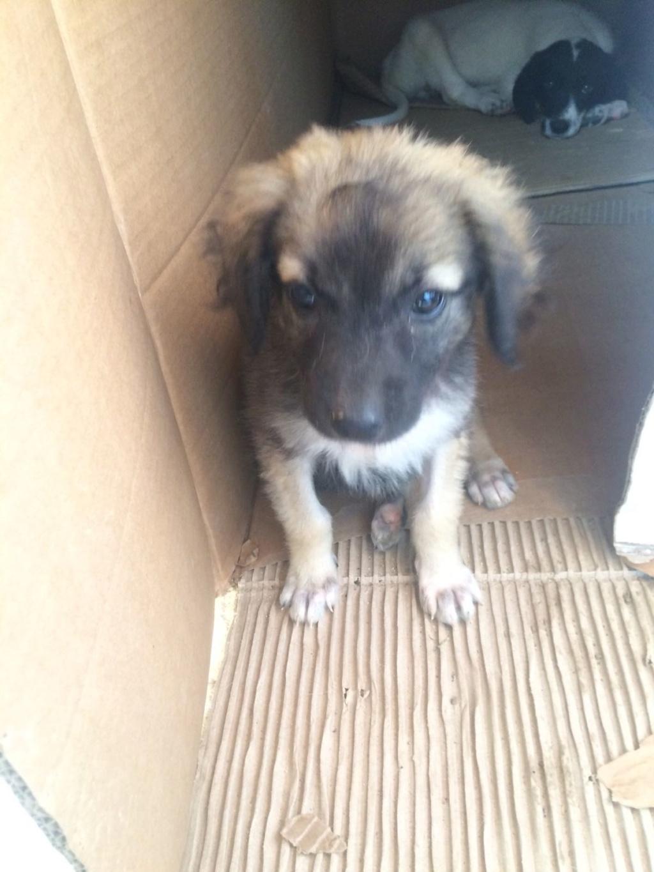 Ruby, petite chienne née en mai 2018 Whatsa13