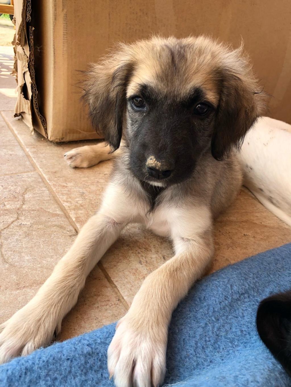 Ruby, petite chienne née en mai 2018 Whatsa19