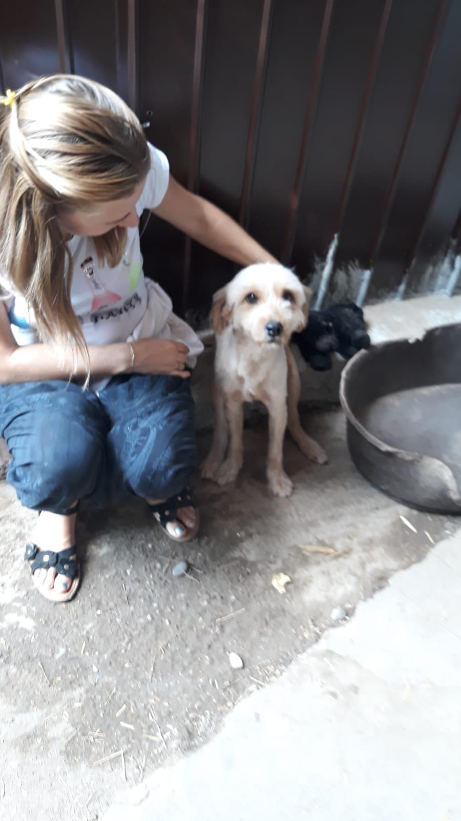 Oguy, jeune chien très sociable né en 2016 Whatsa30