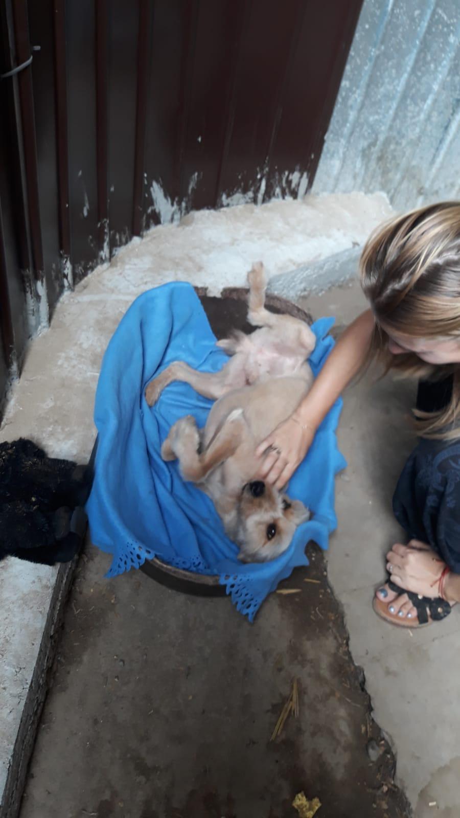 Oguy, jeune chien très sociable né en 2016 Whatsa31