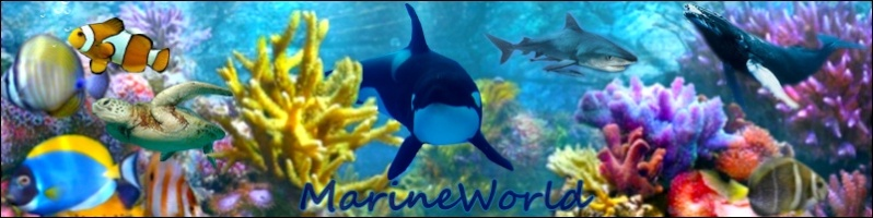 [Forum] MarineWorld - Page 2 Baniar10