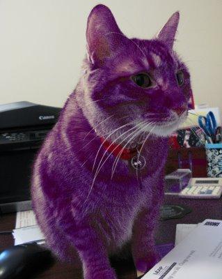 Yak's new kitty!! Purple10