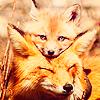 Exemple de fiche de présentation  Animal10