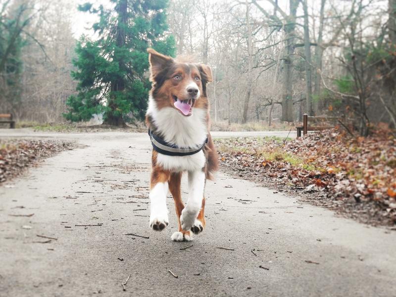 Photographie d'animaux - conseils pour devenir un pro ! - Page 44 P1090017