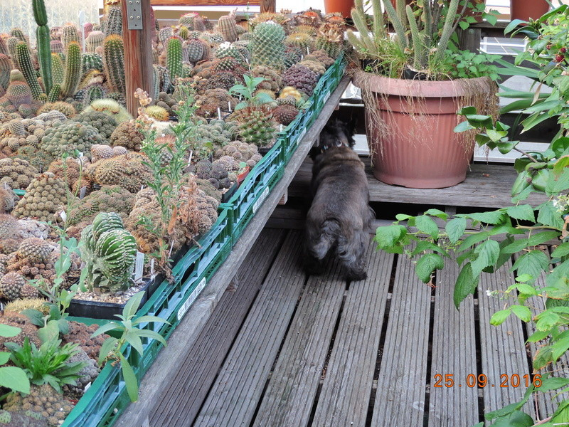 Cacti and Sukkulent in Köln, every day new flowers in the greenhouse Part 155 Bild1064