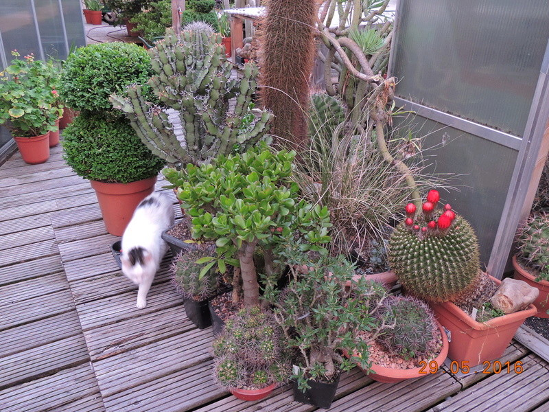 Cacti and Sukkulent in Köln, every day new flowers in the greenhouse Part 157 Bild1409