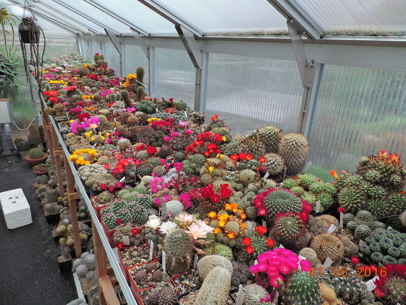 Cacti and Sukkulent in Köln, every day new flowers in the greenhouse Part 158 Bild1436
