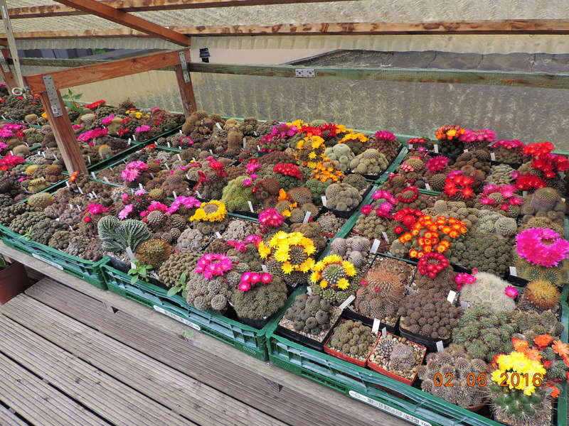 Cacti and Sukkulent in Köln, every day new flowers in the greenhouse Part 158 Bild1453