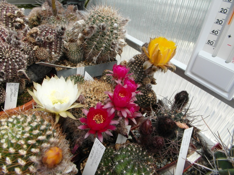 Cacti and Sukkulent in Köln, every day new flowers in the greenhouse Part 53 Bild_122