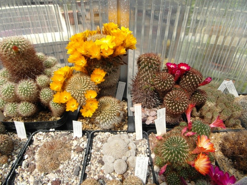 Cacti and Sukkulent in Köln, every day new flowers in the greenhouse Part 53 Bild_143