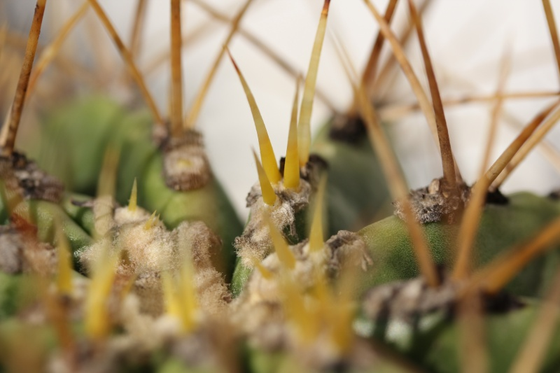 Cacti and Sukkulent in Köln, every day new flowers in the greenhouse Part 54 Bild_150