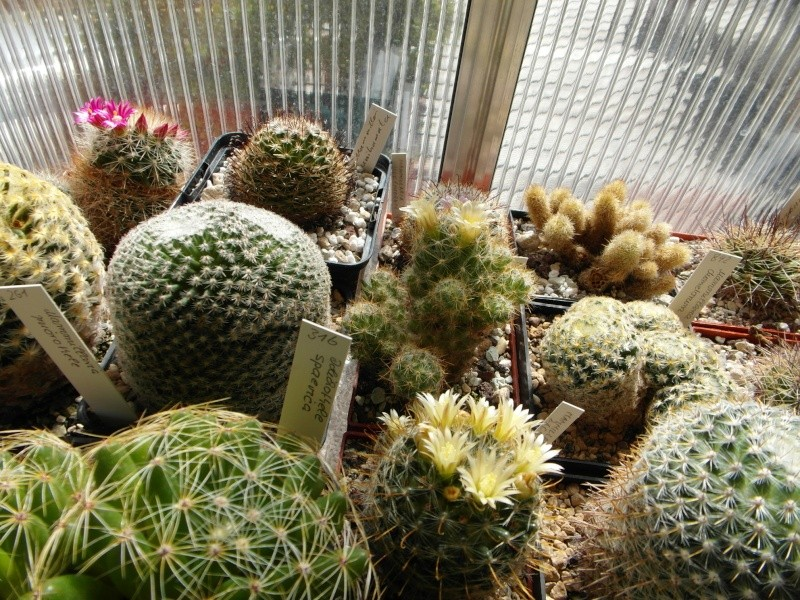 Cacti and Sukkulent in Köln, every day new flowers in the greenhouse Part 54 Bild_242