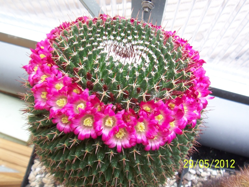 Cacti and Sukkulent in Köln, every day new flowers in the greenhouse Part 54 Bild_310