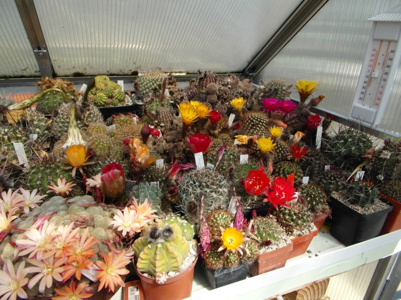 Cacti and Sukkulent in Köln, every day new flowers in the greenhouse Part 56 Bild_482