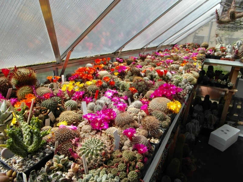 Cacti and Sukkulent in Köln, every day new flowers in the greenhouse Part 56 Bild_483