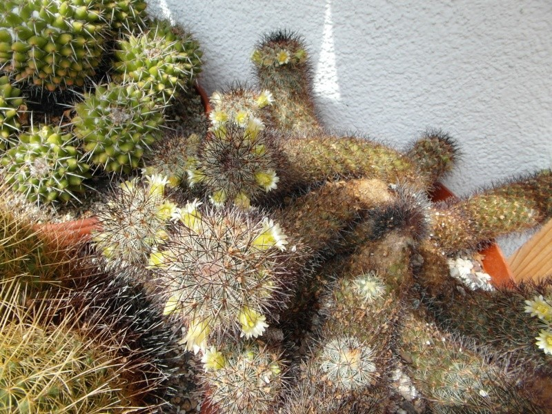 Cacti and Sukkulent in Köln, every day new flowers in the greenhouse Part 57 Bild_695