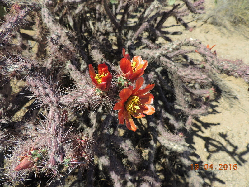 Cacti and Sukkulent in Köln, every day new flowers in the greenhouse Part 152 Bild_739