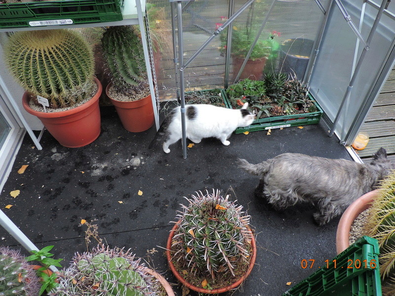 Cacti and Sukkulent in Köln, every day new flowers in the greenhouse Part 153 Bild_763