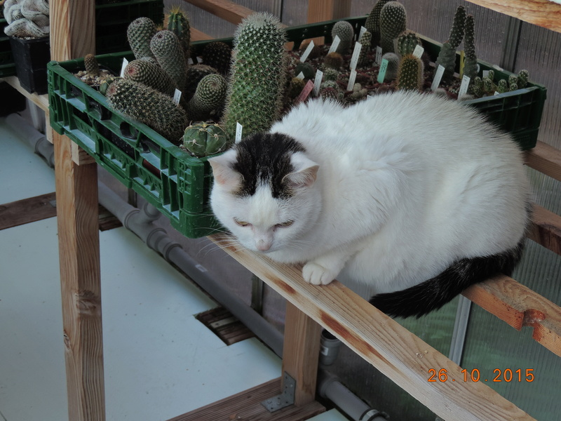 Cacti and Sukkulent in Köln, every day new flowers in the greenhouse Part 153 Bild_791