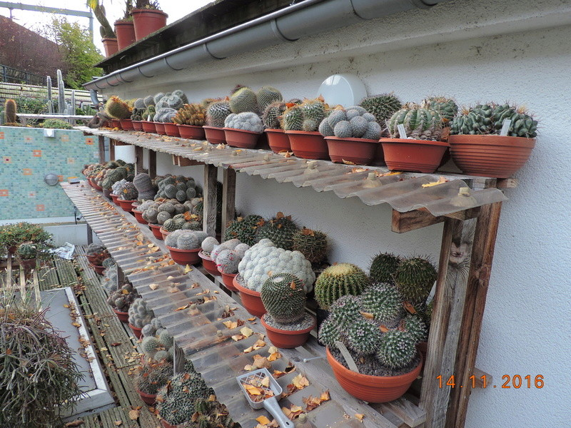 Cacti and Sukkulent in Köln, every day new flowers in the greenhouse Part 153 Bild_834