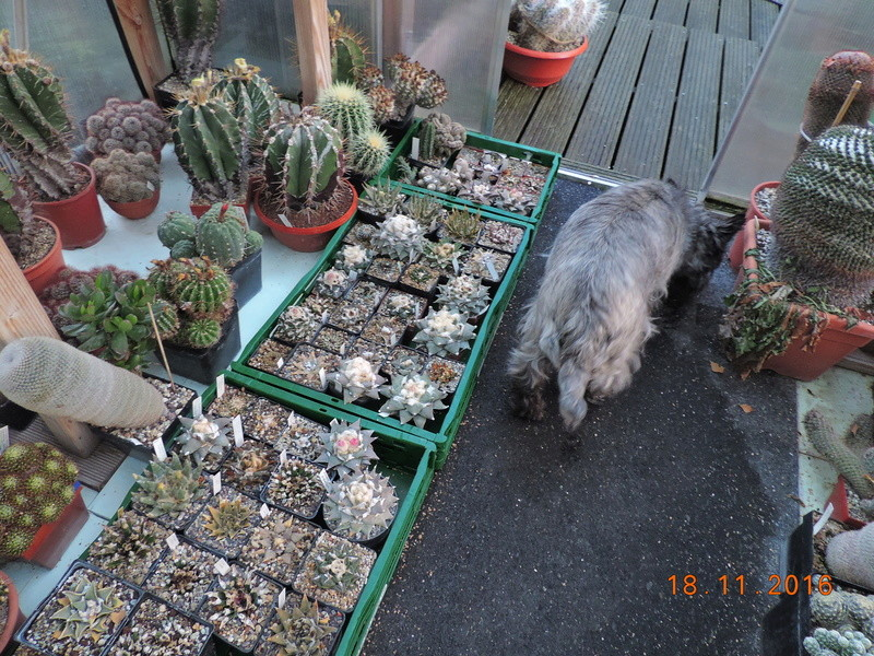 Cacti and Sukkulent in Köln, every day new flowers in the greenhouse Part 154 Bild_886