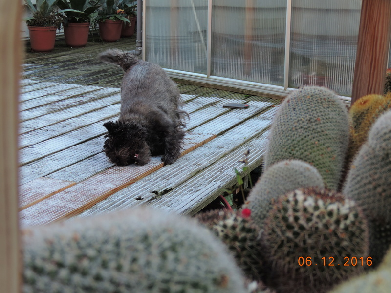 Cacti and Sukkulent in Köln, every day new flowers in the greenhouse Part 154 Bild_920