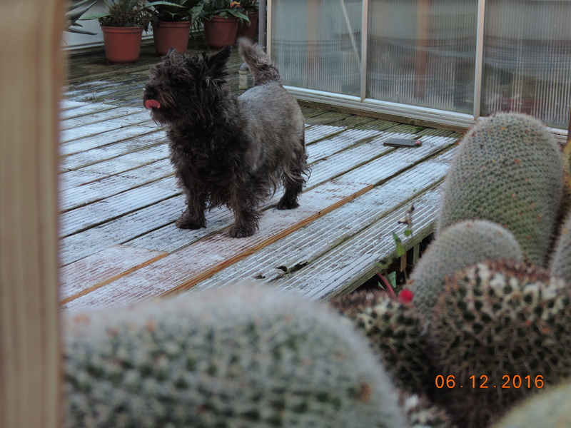 Cacti and Sukkulent in Köln, every day new flowers in the greenhouse Part 154 Bild_921