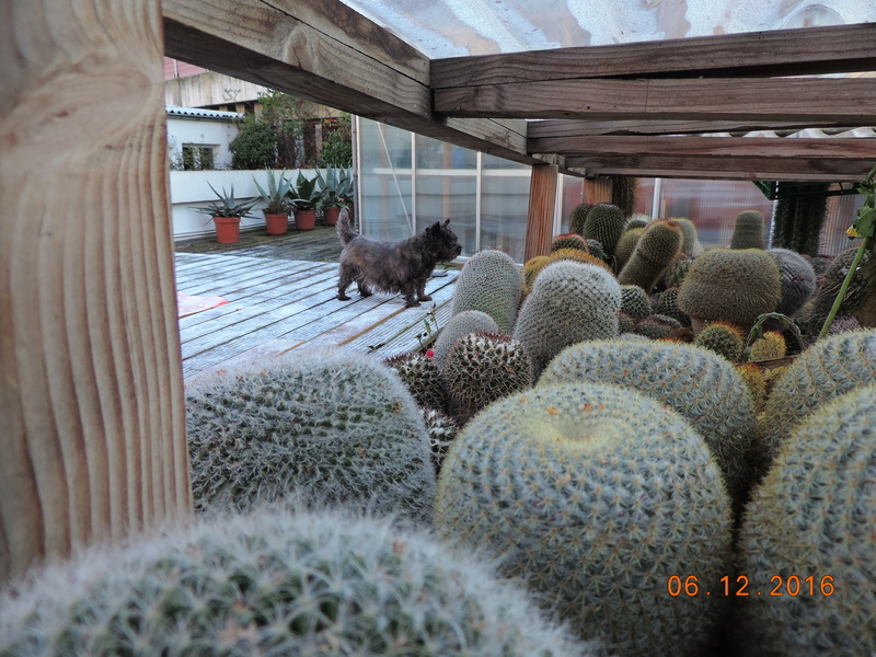 Cacti and Sukkulent in Köln, every day new flowers in the greenhouse Part 154 Bild_922