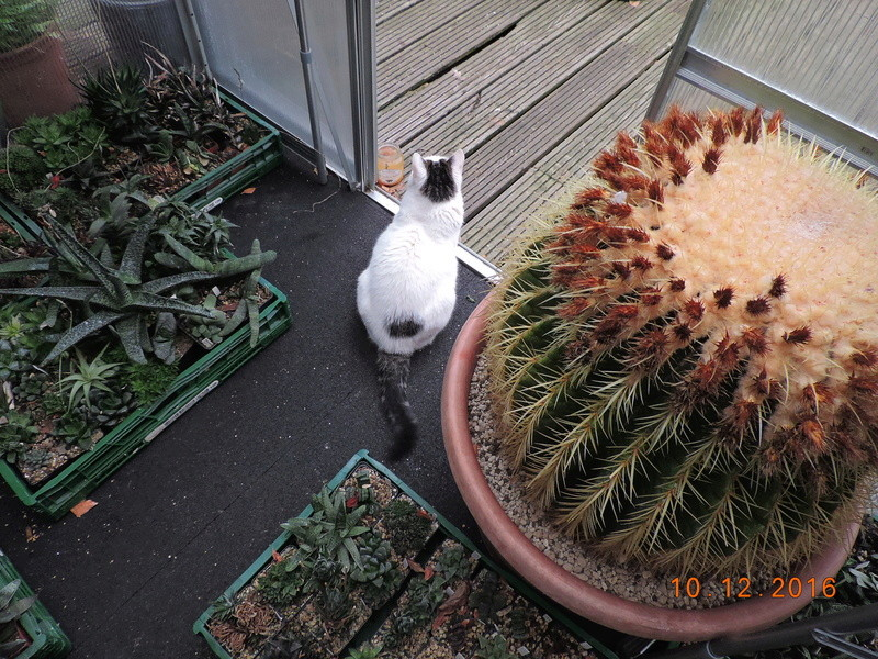 Cacti and Sukkulent in Köln, every day new flowers in the greenhouse Part 154 Bild_983
