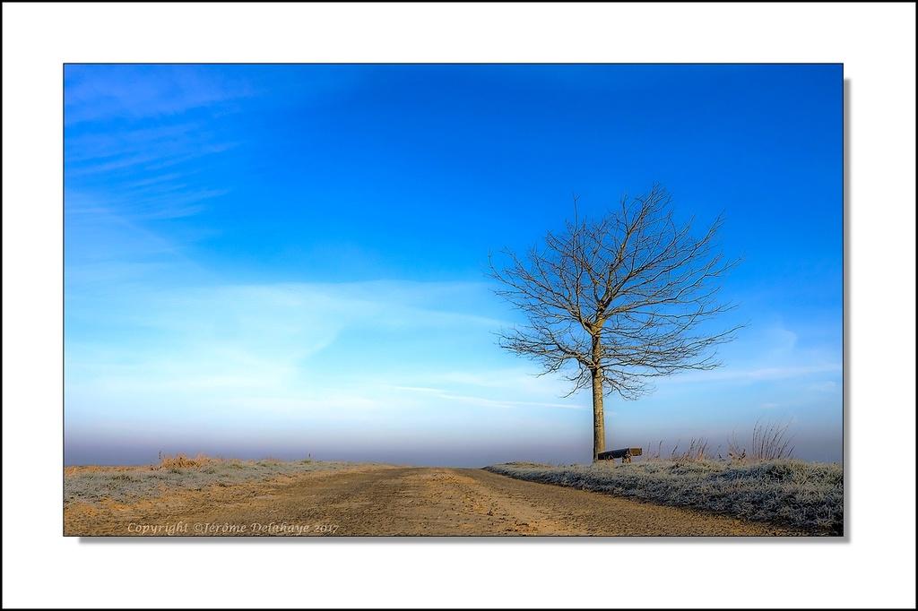 L'arbre P1220010