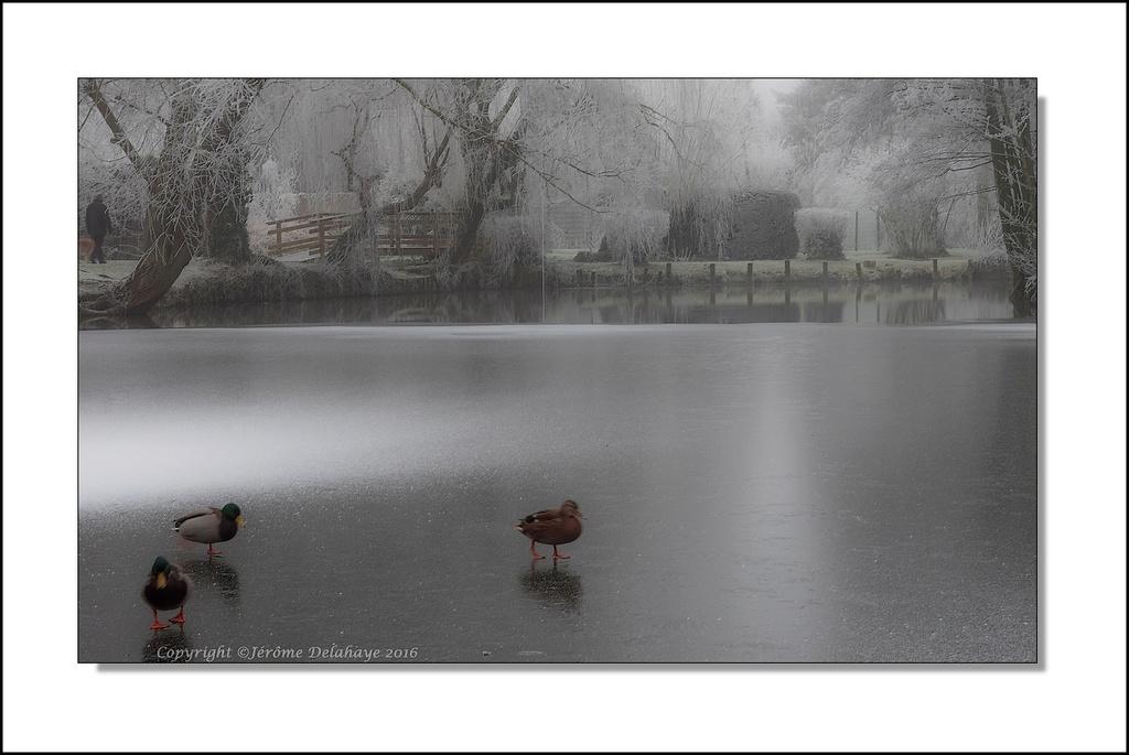 La patinoire aux canards Pc310011