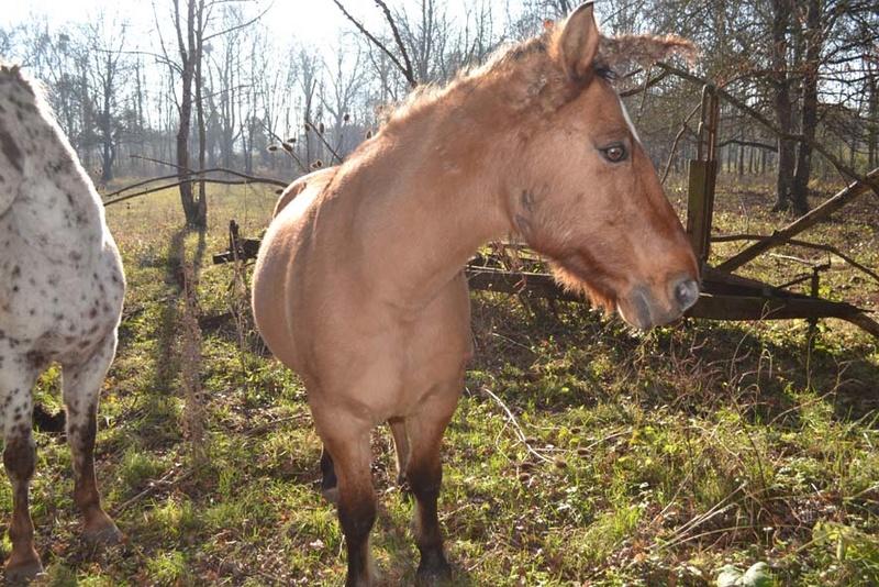 IDAO  - ONC Poney typé Henson né en 1996 - adopté en mai 2009 par Florence Photo_26