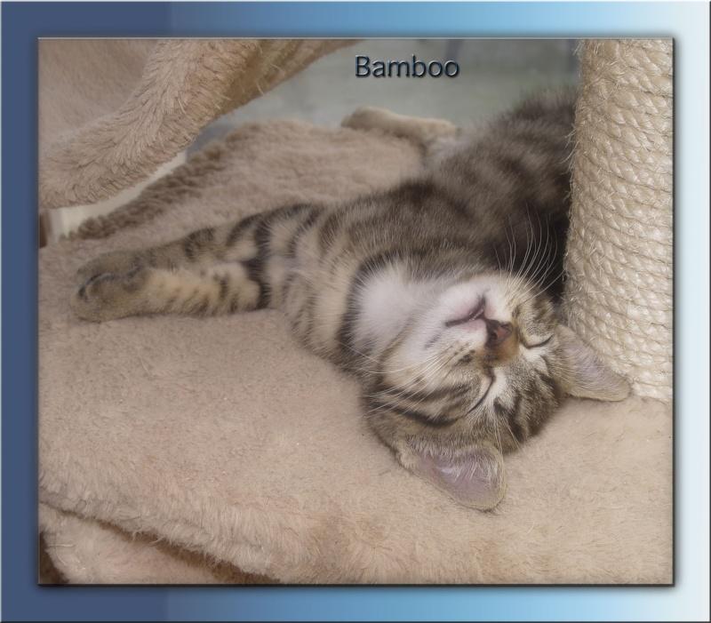 Bamboo Bamboo18