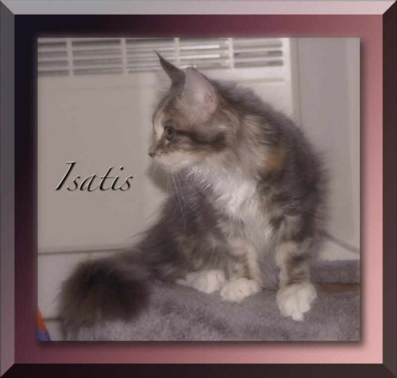Princesse Isatis - Page 2 Isatis12